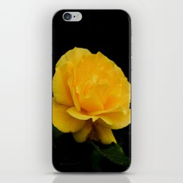 Golden Yellow Rose Isolated on Black Background iPhone Skin