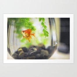 Goldfish #2 Art Print