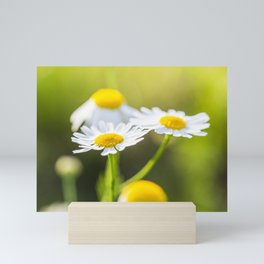 Daisies Mini Art Print