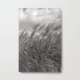 sugar cane field  Metal Print