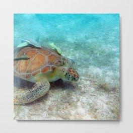 Watercolor Turtle, Green Turtle 32, St John, USVI Metal Print