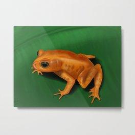 Golden toad Metal Print