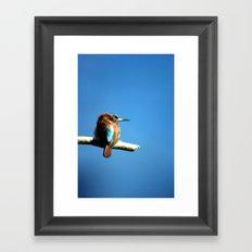 Bee-eater Framed Art Print