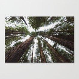 Redwood Portal - nature photography Canvas Print