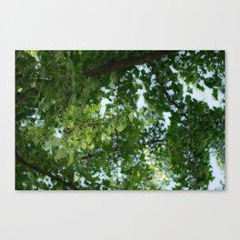 Ginkgo biloba tree in the city Canvas Print
