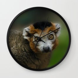 Crowned Lemur Looking At You Wall Clock