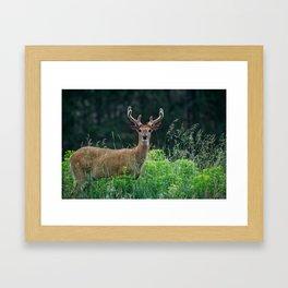 Deer and Flowers Framed Art Print