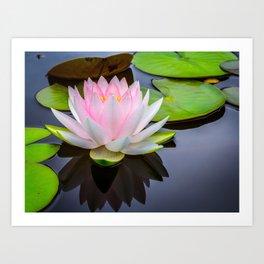 Pink Lotus & Green Lily Pads On A Jet Black Pond Art Print