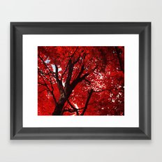 Red Canopy Framed Art Print