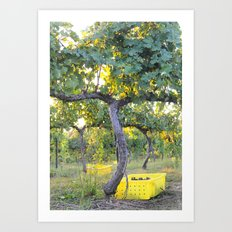 Vineyard at Sunrise Art Print