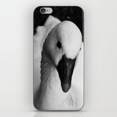 White Swan  iPhone & iPod Skin