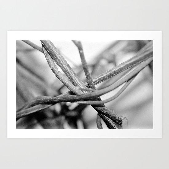 Crossing Vines Art Print