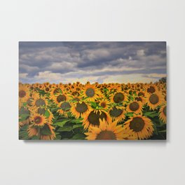 Sunflower Print Metal Print