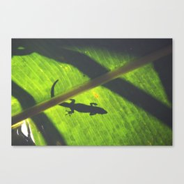 Green Geco Canvas Print