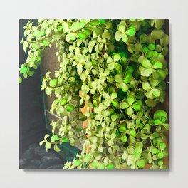 Green Leaves By Stucco Wall Metal Print