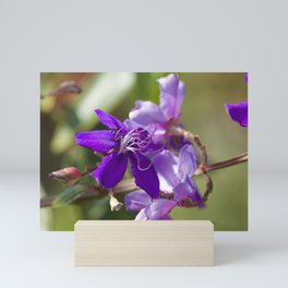 """Viola Vibrante"" by ICA PAVON Mini Art Print"