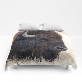 Buffalo Bison Up Close Comforters