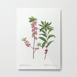 February daphne (Daphne Mezereum) from Traité des Arbres et Arbustes que l'on cultive en France en p Metal Print