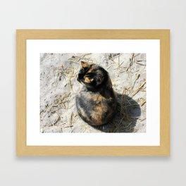 Sand Kitty Framed Art Print