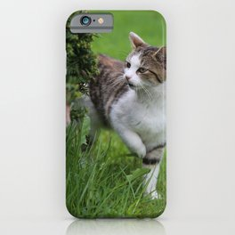 house cats iPhone Case