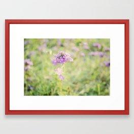 Soft Flower Framed Art Print