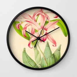 LAELIA AUTUMNALIS Vintage Botanical Floral Flower Plant Scientific Illustration Wall Clock