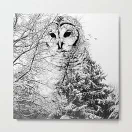 Winter Owl Metal Print
