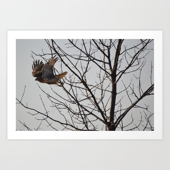 Hawk Taking Flight Art Print