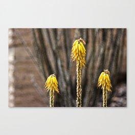 desert wild Canvas Print