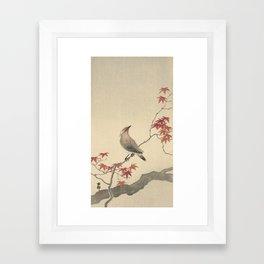 Japanese Maple Songbird  Framed Art Print