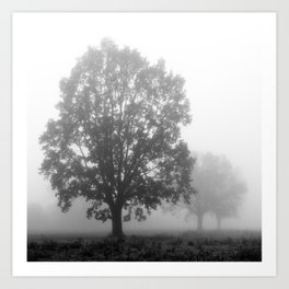 Trees on a Misty Morning Art Print