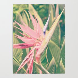 Bird of Paradise ll Poster