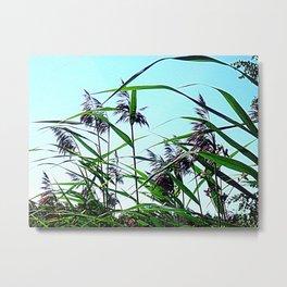 Hay in the summer Metal Print
