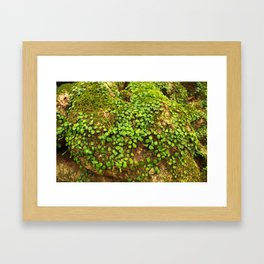 Moss is slow life Framed Art Print