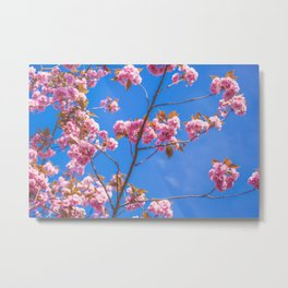 Pink Spring Cherry Blossoms Metal Print