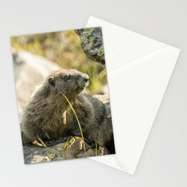 Marmot on Naches Peak Stationery Cards