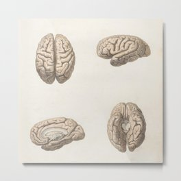 Brain anatomy Metal Print