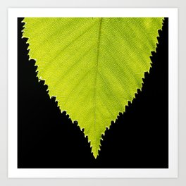 Leaf by Althéa Photo Art Print