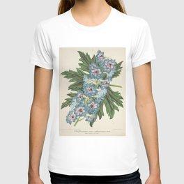 Delphinium Wseo Coelestinum Vintage Botanical Floral Flower Plant Scientific T-shirt