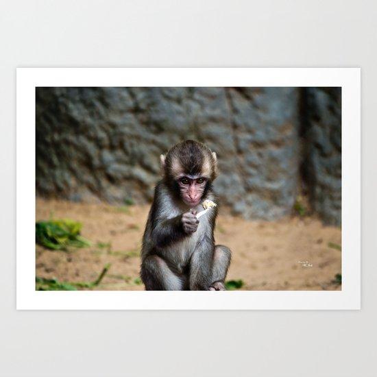 Japanese Macaque Monkey Art Print