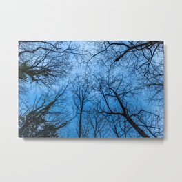 Blue sky over naked trees tops Metal Print