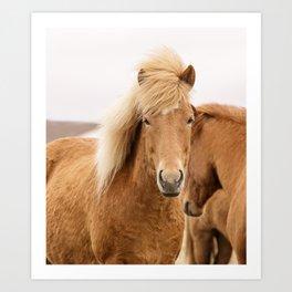 Icelandic Chestnut Horse Art Print