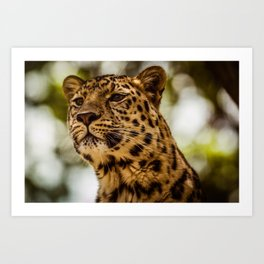Leopard Art Print