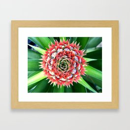 Young Pineapple Framed Art Print