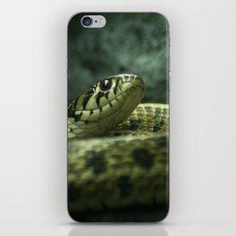 Alerted snake iPhone Skin