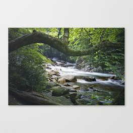 Smoky Mountain Stream in Tennessee Canvas Print