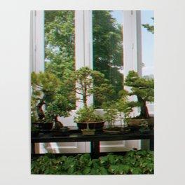 Bonsai Window Poster