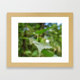 Curiosity In the Insect World--Animal Photography Prints Framed Art Print