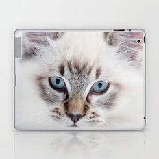 Blue Eyed Kitty Laptop & iPad Skin