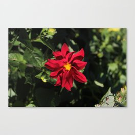 Flower.Dahlias Canvas Print